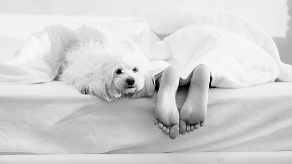Fluffy dog next to a pair of feet sticking out from under a duvet